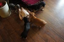 (269, 270, 271, 272) Tiki, Midori, Bailey and Sophia