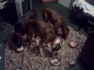 (274, 275, 276) Annie, Nalah and Tucker