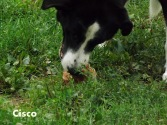 (349) Cisco
