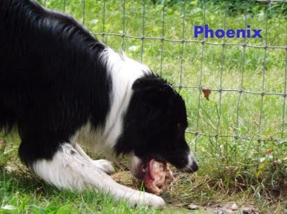 (350) Pheonix