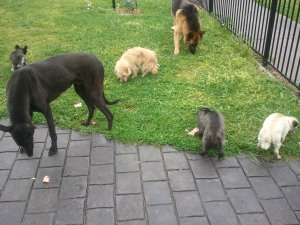 (136, 137, 138, 139, 140, 141) Sam, Blackie, Spencer, Pepper, Spike, Cloey