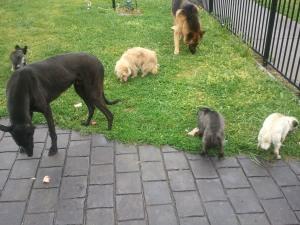 (136, 137, 138, 139, 140, 141) Sam, Blackie, Spencer, Pepper, Spike, Cloey