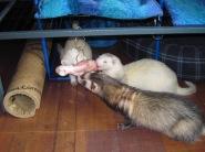 (4) Pandora, Craven and Blackie