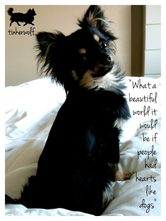 tinkerwolf dog photo quotes 18 hearts like dogs