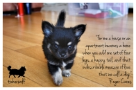 tinkerwolf dog photo quotes 19 A house becomes a home