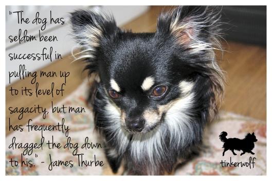 tinkerwolf dog photo quotes 22 The dog has seldom