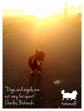 tinkerwolf dog photo quotes 24 Dogs and angels.jpg