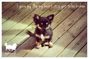 tinkerwolf dog photo quotes 34 I gave my dog my heart
