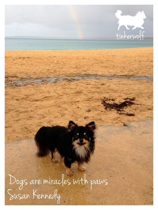 tinkerwolf dog photo quotes 38 Dogs are miracles