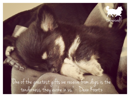 tinkerwolf dog photo quotes 42 One of the greatest gifts