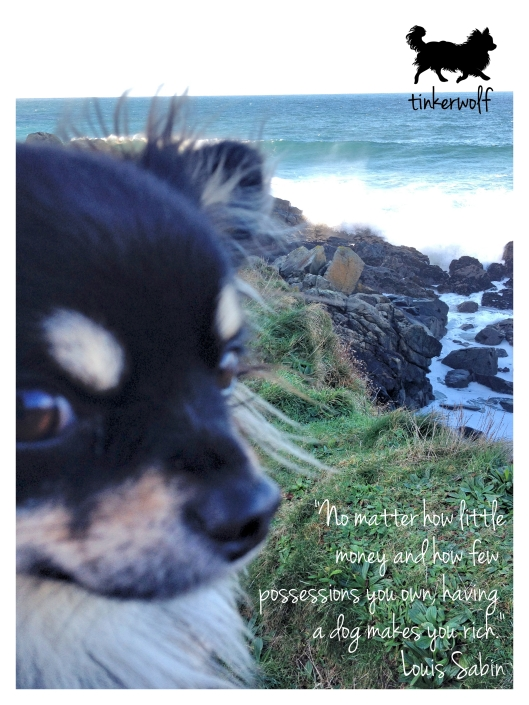 tinkerwolf dog photo quotes 43 No matter how little