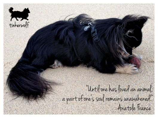 tinkerwolf dog photo quotes 45 Until one has loved an animal