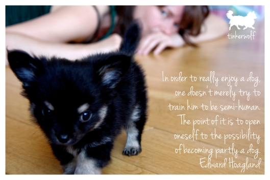 tinkerwolf dog photo quotes 46 In order to really enjoy a dog.jpg