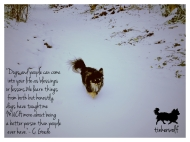 tinkerwolf dog photo quotes 48 Dogs and people