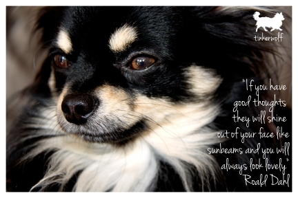 tinkerwolf dog photo quotes 49 If you have good thoughts