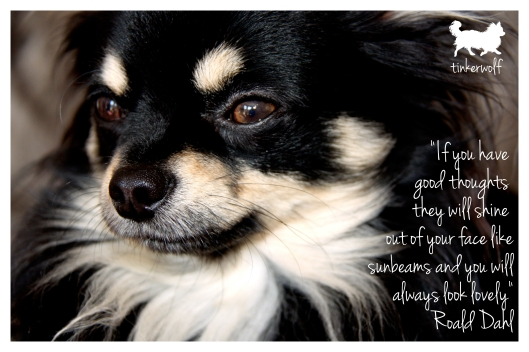 tinkerwolf dog photo quotes 49 If you have good thoughts.jpg