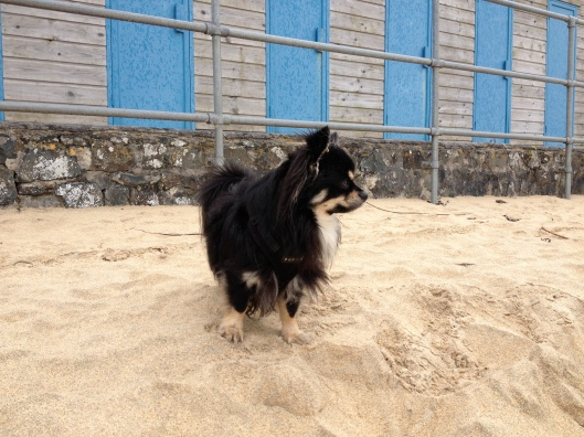 Ted by the beach huts