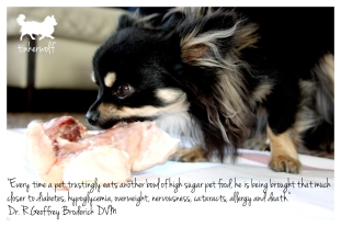 tinkerwolf dog photo quotes 51 Every time a pet trustingly