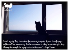 tinkerwolf dog photo quotes 55 I watch my dogs