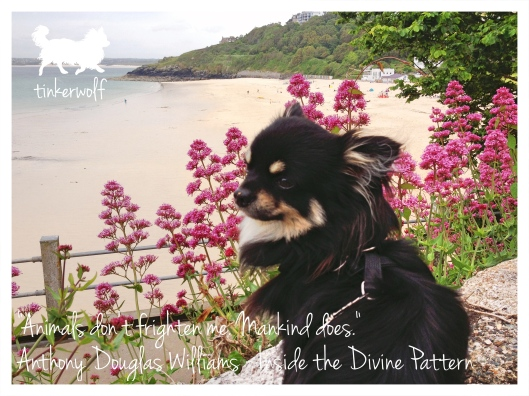 tinkerwolf dog photo quotes 61 Animals don't frigten me.jpg