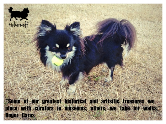 tinkerwolf dog photo quotes 63 Some of our greatest.jpg