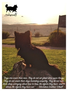 tinkerwolf dog photo quotes 64 Dogs are wiser than men