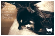 tinkerwolf dog photo quotes 65 The greatest gift that you can give
