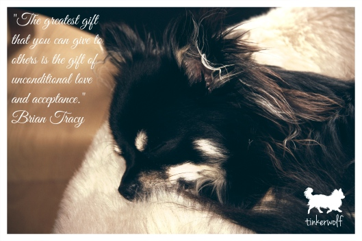 tinkerwolf dog photo quotes 65 The greatest gift that you can give.jpg