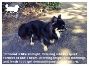 tinkerwolf dog photo quotes 67 A friend is like sunlight