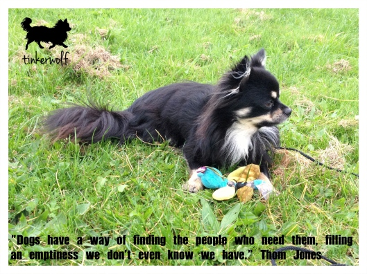 tinkerwolf dog photo quotes 71 Dogs have a way of finding.jpg