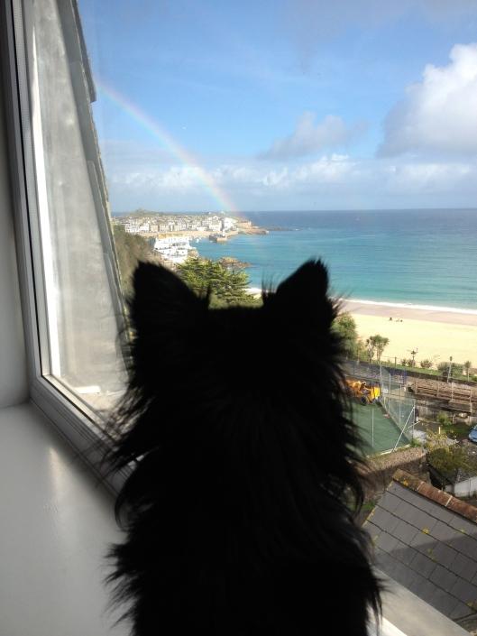Rainbow Ted
