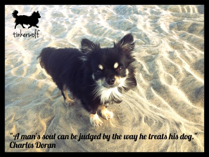 tinkerwolf dog photo quotes 75 A man's soul can be judged