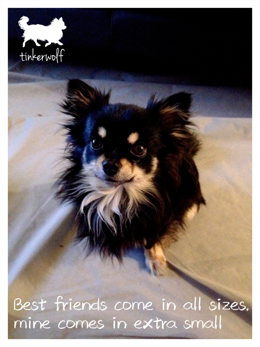 tinkerwolf dog photo quotes 76 Best friends come in all sizes.jpg