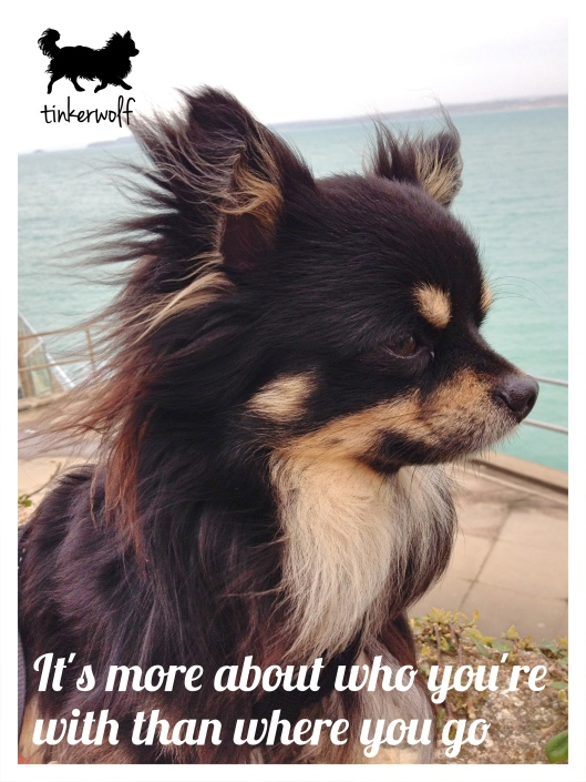 tinkerwolf dog photo quotes 78 Who you're with.jpg