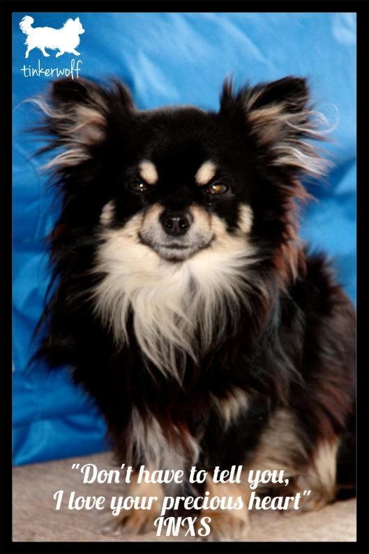 tinkerwolf dog photo quotes 79 Love your precious heart.jpg