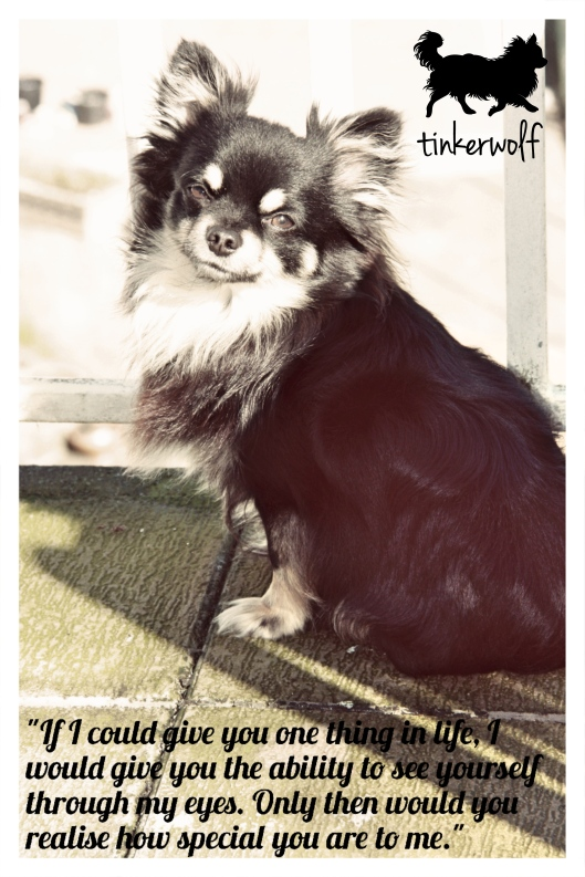 tinkerwolf dog photo quotes 80 Realise how precious you are.jpg