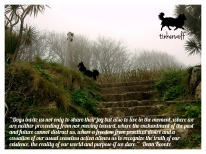 tinkerwolf-dog-photo-quotes-82-dogs-invite-us