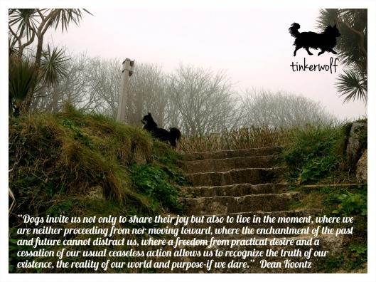 tinkerwolf dog photo quotes 82 Dogs invite us.jpg