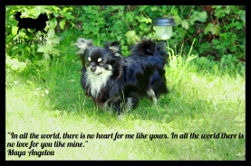 tinkerwolf-dog-photo-quotes-83-in-all-the-world