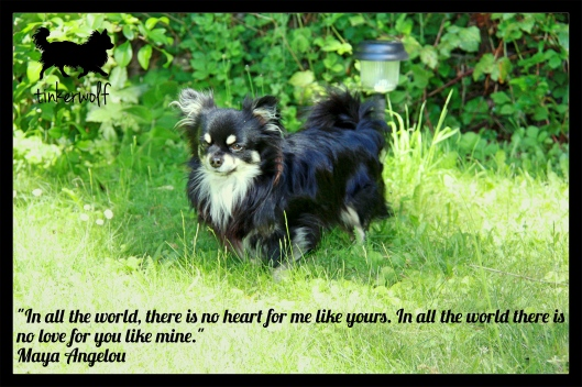 tinkerwolf dog photo quotes 83 In all the world.jpg