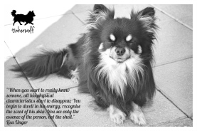 tinkerwolf dog photo quotes 85 When you start to